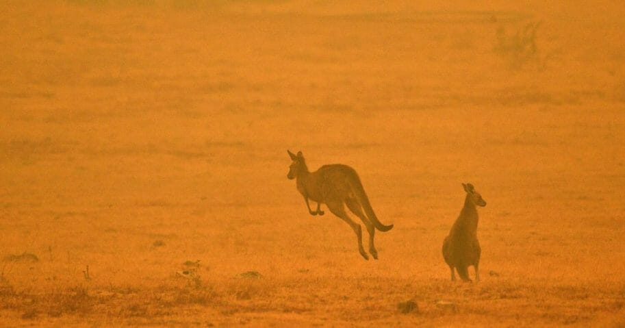 A kangaroo jumps in a field amid smoke from a brushfire on the outskirts of Cooma, Australia, on January 4, 2020.