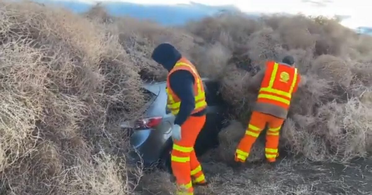 Workers help dig out a car buried in tumbleweeds in Washington state.