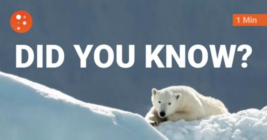 Facebook reduced the distribution of PragerU's page after the conservative nonprofit posted a video about polar bears and climate change.