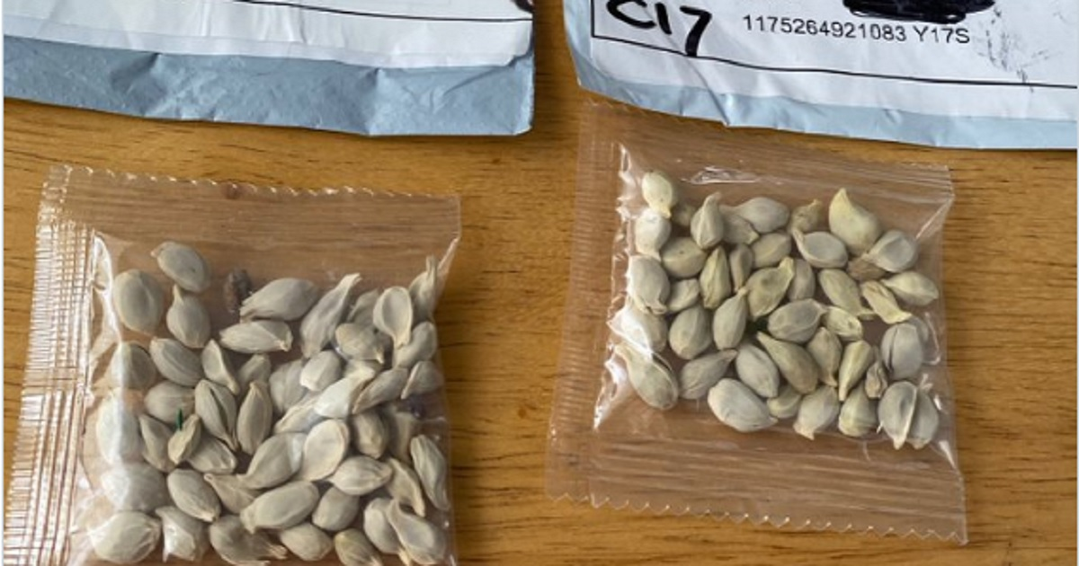Two packages of seeds.