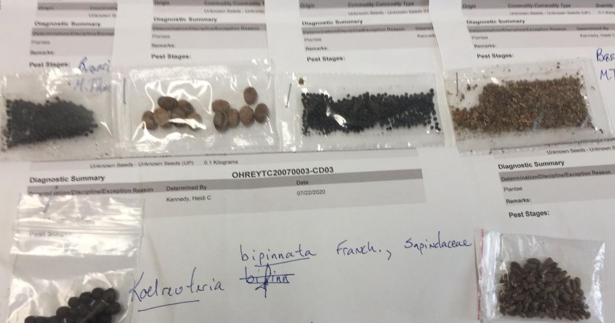 An assortment of seeds that arrived in the mail unsolicited from China.