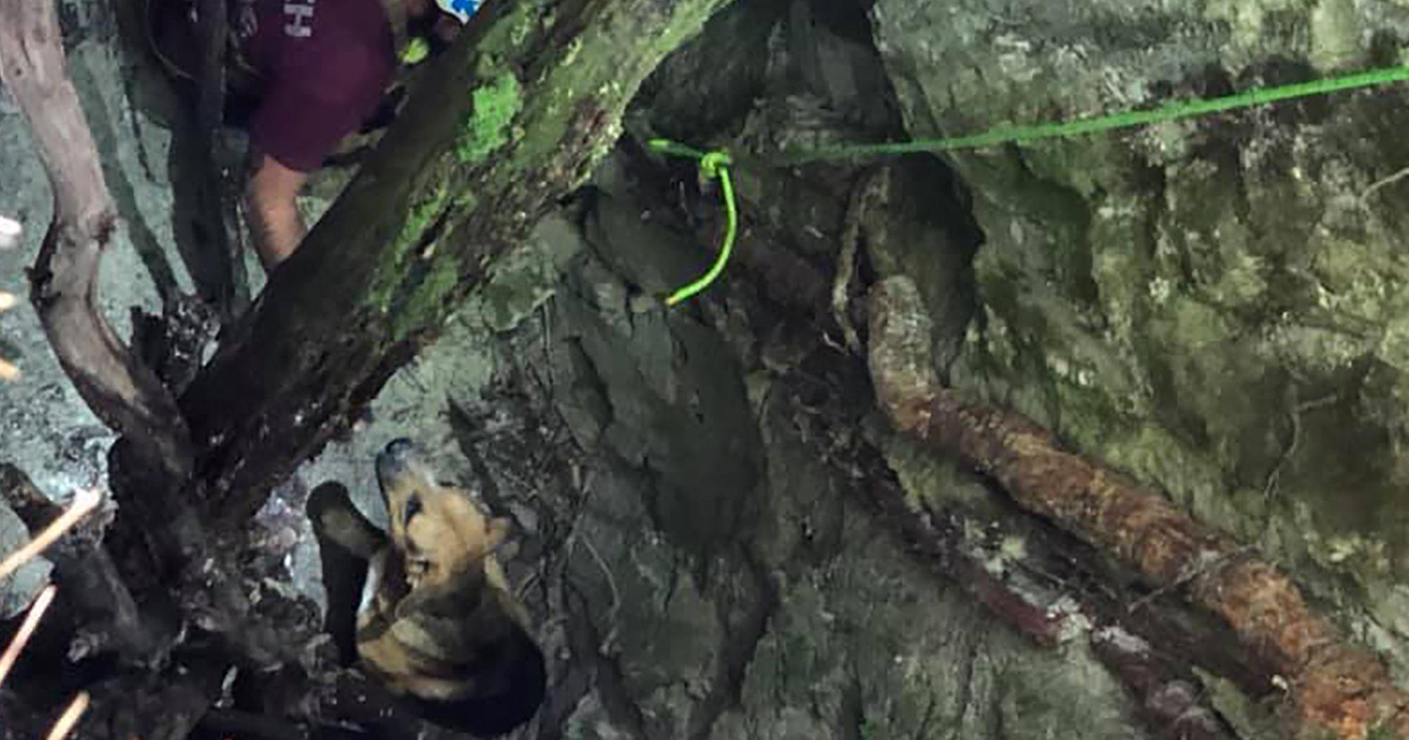 Sinkhole Dog Saved