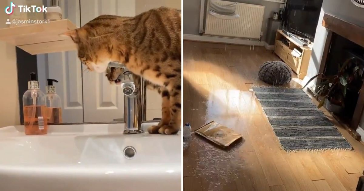 Clever cat turns on sink