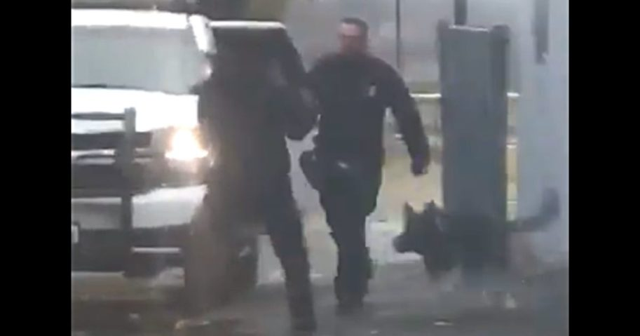 A K-9 officer and his handler engage a suspect in Newburgh, New York in November 2019.