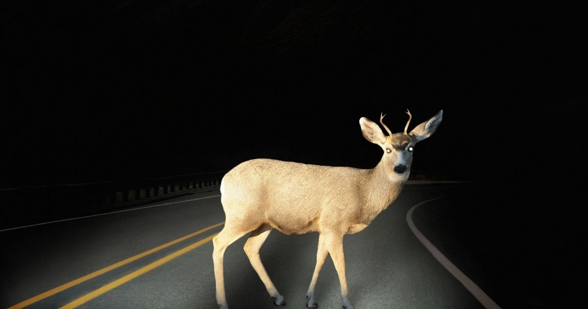 In this stock photo, a deer is caught in the headlights on a rural road. In Kentucky, a 29-year-old man is accused of illegally using his SUV headlights to hunt for deer.