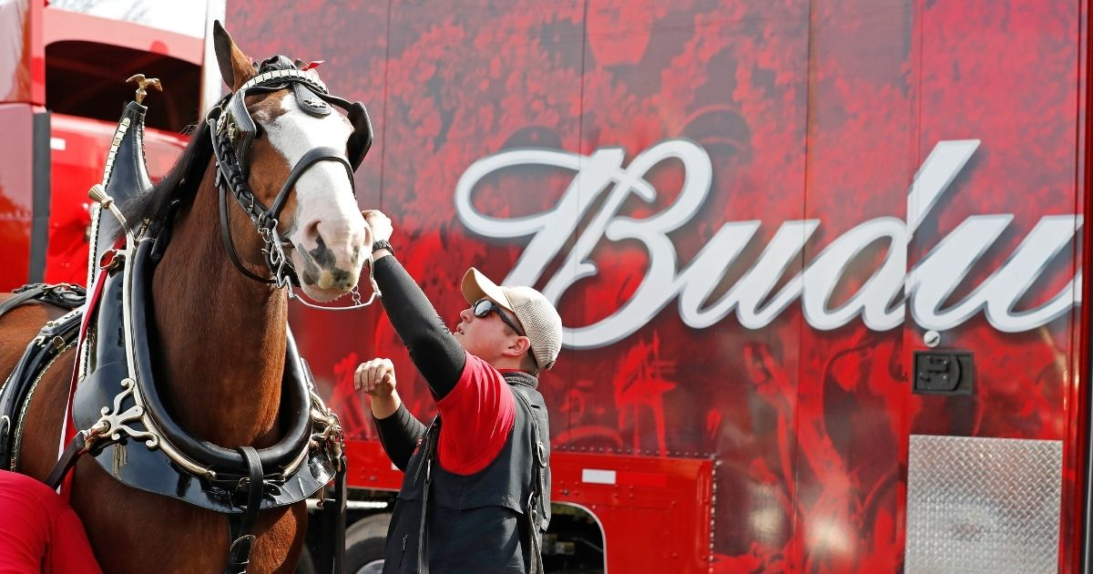 The iconic Budweiser Clydesdales kick off the weekend of Super Bowl LIII in Atlanta on Feb. 1, 2019.