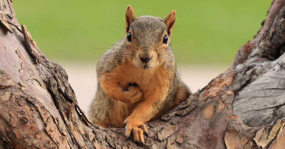 A squirrel sits on a tree in the stock image above.