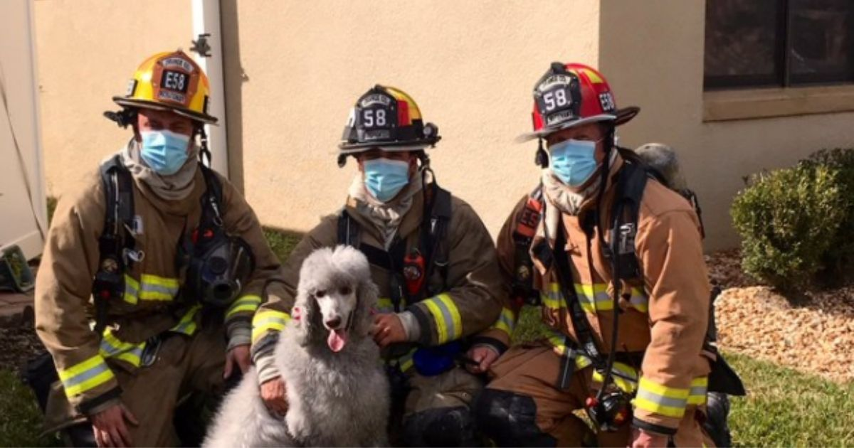 Two sets of heroes -- firefighters and Prada the poodle -- relax outside of the Florida home they all played a part in saving.