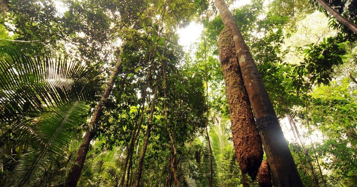The Amazon rainforest in Brazil.