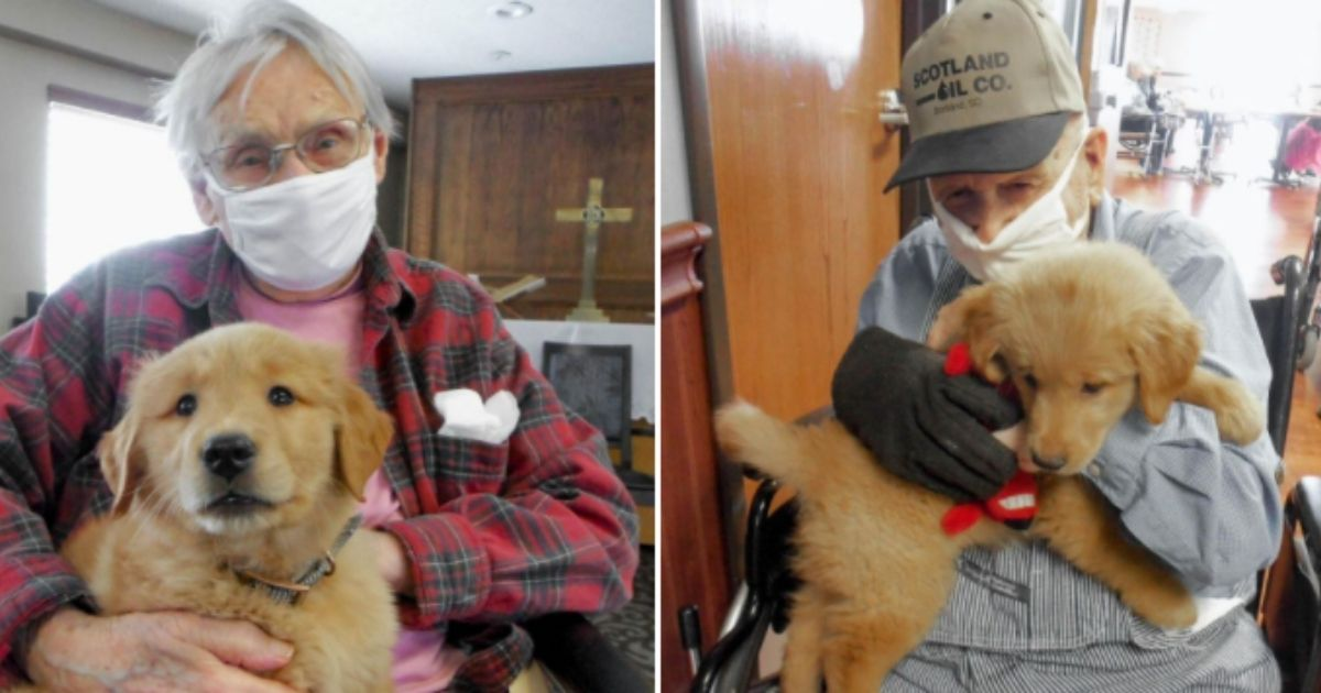 Nursing-home residents in Scotland, South Dakota, hold Gracie, a golden retriever puppy who frequents the center.