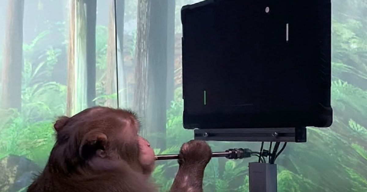 A monkey plays a video game via brain chip in this picture posted on social media by Elon Musk through his Neuralink Corp. on April 8, 2021.