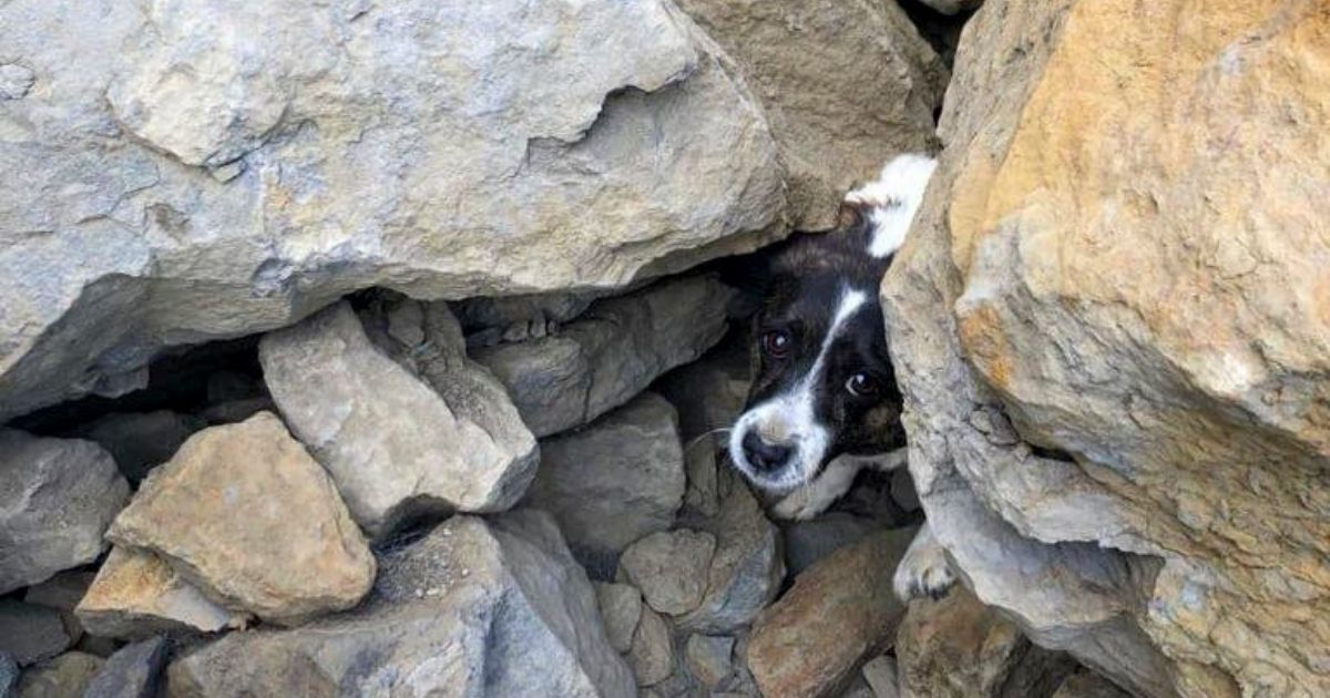Murphy, a dog who'd been lost for three days, was found with his leg pinned by a rock.