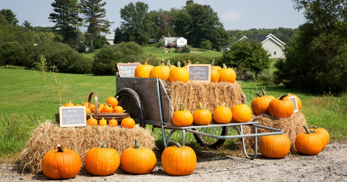A roadside farm stand is seen in the above stock image.
