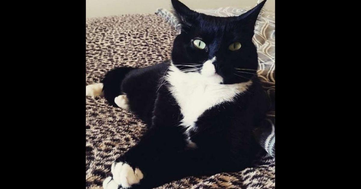 Piper the cat