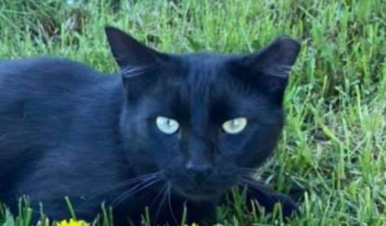 Panther, a black cat who was trapped and moved, was found by a family who was very thankful for the reward money.