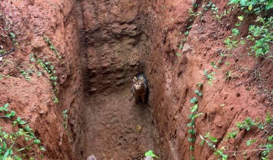 A Siberian Husky named Kira who was stuck at the bottom of a deep pit was rescued on May 12, 2021, by a man who was working on the property.