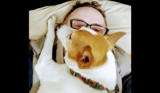 Alice, a 14-year-old Jack Russell and John Hickey's faithful companion, who was reportedly killed in a random attack on Saturday.