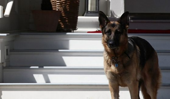 Then-Vice President Joe Biden's dog, Champ, stands during speeches at a Joining Forces service event at the then-Vice President's residence at the Naval Observatory May 10, 2012, in Washington, D.C.