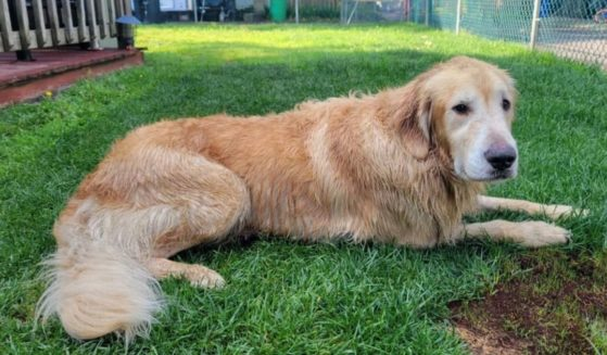 A golden retriever named Chunk was missing for over two weeks before being spotted and contained by several citizens and state troopers as he swam across a bay in New Jersey.