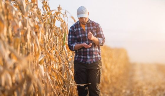 A stock photo shows a young farmer in a corn field.