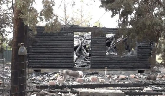Ryan Littlefield and Robin Whitaker's inherited log cabin. It burned down on June 7, but the couple's dogs managed to wake Whitaker, the only person home at the time, and lead her safely outside.