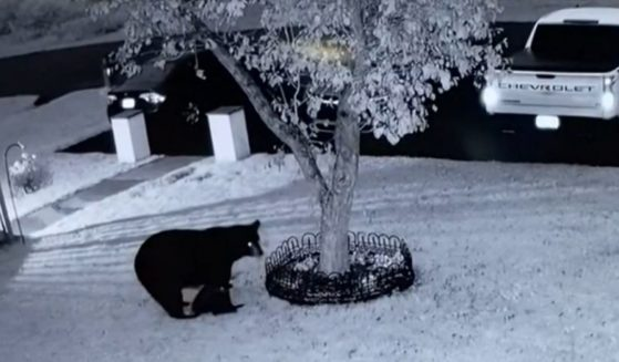 A mother bear and her cub are seen in the front yard of a house belonging to a couple from Pennsylvania.