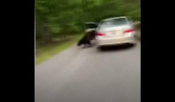 A Georgia woman was shocked to find a bear ripping the interior of her car to shreds during a work trip in neighboring Tennessee.