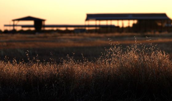 Dry grass covers a field at a farm on May 25, 2021, in Madera, California. As California enters an extreme drought emergency, water is starting to become scarce in California's Central Valley, one of the most productive agricultural regions in the world.