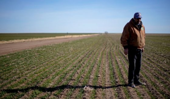 Rod Bradshaw stands in a field of wheat on his farm near Jetmore, Kansas, on Jan. 13.
