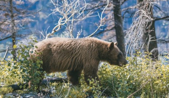A bear is seen in this stock image.