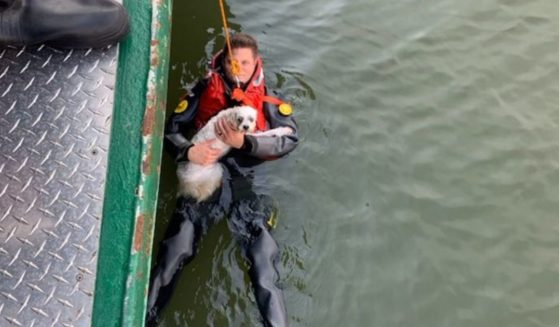 A man holds his dog, who fell into the Hudson River.