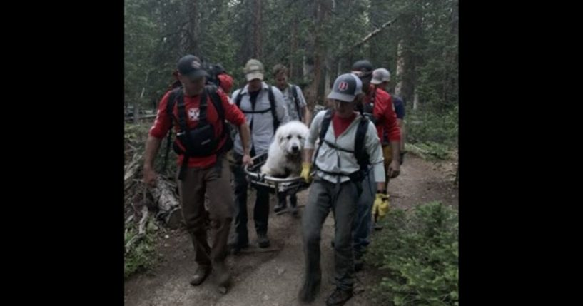 Volunteers with the Summit County Rescue Group escort a great Pyrenees down a trail after it collapsed.