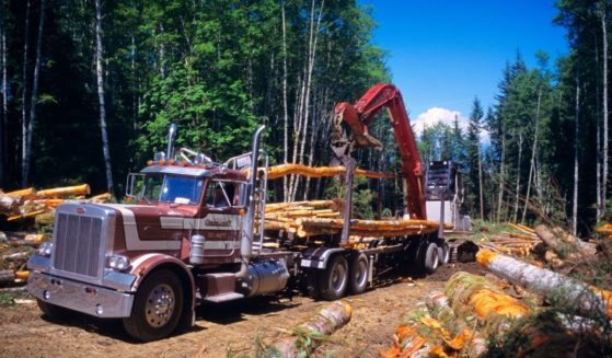 A logging truck is pictured being loaded with recently felled trees in the stock image above.