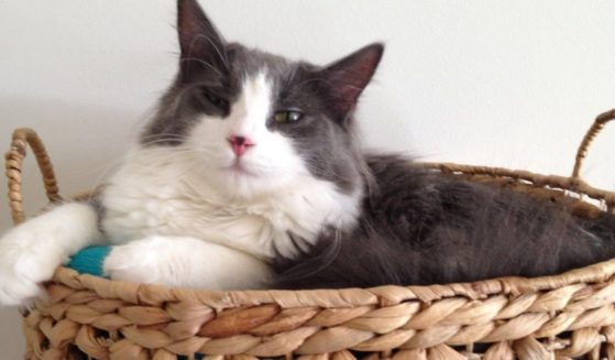 Mini Max, who was found 10 miles from his home six years after disappearing, and was reunited with his family thanks to a microchip.