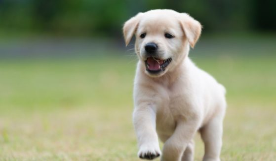 A puppy is pictured in the stock image above.