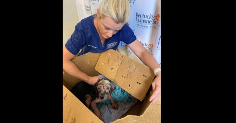 Kentucky Humane Society shelter veterinarian Dr. Emily Bewley examines a pup found taped inside a cardboard box and abandoned on shelter property.