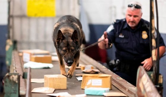 An officer from the Customs and Border Protection, Trade and Cargo Division works with a dog to check parcels at John F. Kennedy Airport's US Postal Service facility on June 24, 2019, in New York.