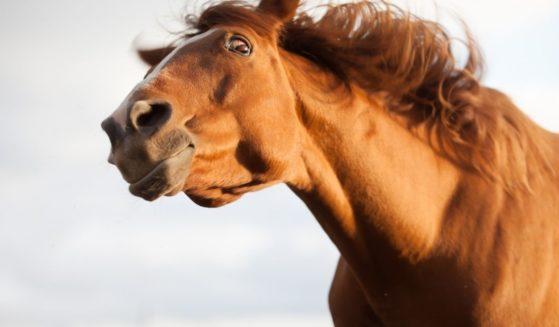 A horse looks surprised.