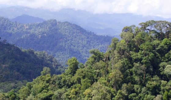 A rain forest in seen in the Malaysian state of Sarawak.