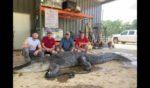 John Hamilton, Todd Hollingsworth, Landon Hollingsworth and Drew Barryhill pose with the monster alligator they found near Vicksburg, Mississippi.