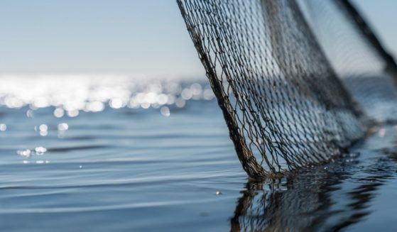 This stock image shows a fishing net cast over water in Schleswig Holstein, Germany, on Sept. 18, 2018. A sunfish weighing over 4,400 pounds was recently found tangled in fishing nets in the Spanish territory of Ceuta, near Morocco.