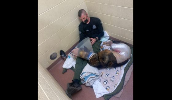 K9 Nikos recovers in the Upstate Vet Emergency + Specialty Care hospital in Greenville, South Carolina.