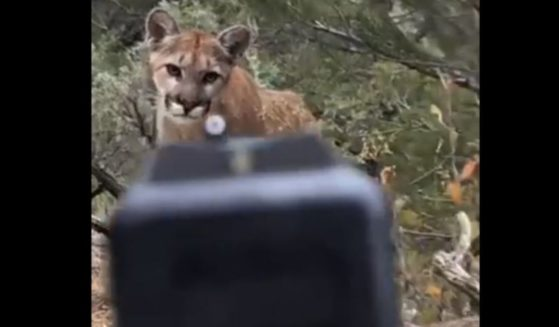 A mountain lion came across a man, who claims he then shot the animal in self defense.