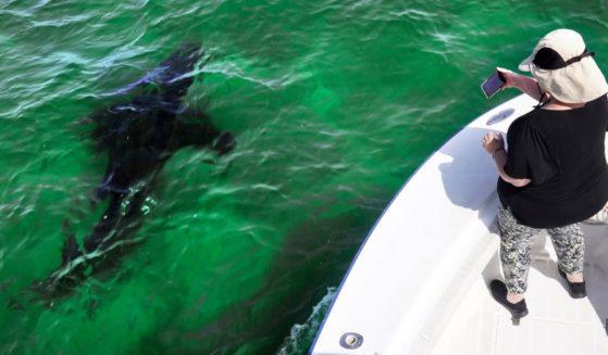 Mindi Moran, a tourist in Cape Cod, Massachusetts, goes shark watching on Aug. 17.